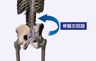 骨盤左回旋