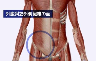 外腹斜筋外側繊維の面