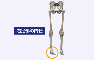 右足部の内転
