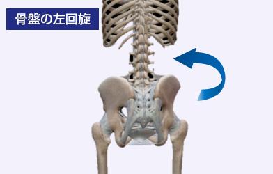 骨盤の左旋回