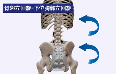 骨盤左回旋・下位胸郭左回旋
