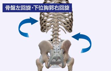 骨盤左回旋・下位胸郭右回旋