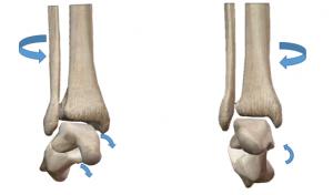 距骨下関節,動きの基礎,ST関節