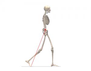 転倒予防,胸郭の動き